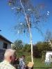 Mai-Baum stellen Gündi